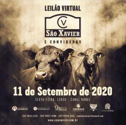 Leilão São Xavier - Virtual