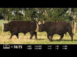 Touros Ultrablack - Tat 6131 - 6130