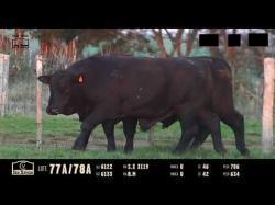Touros ULTRABLACK - Tat 6122 - 6133