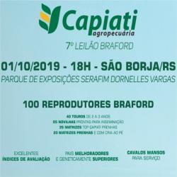7º Leilão Braford Capiati - São Borja
