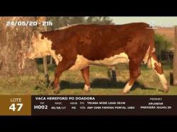01 vaca Hereford PO doadora
