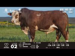 lote 2 - I117 - Braford 3a