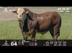 lote 5 - D135 - Braford 3a