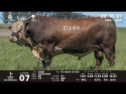 lote 7 - D299 - Braford 3a