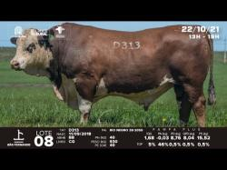 lote 8 - D313 - Braford 3a
