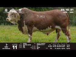 lote 11 - D363 - Braford 3a