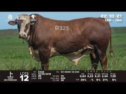 lote 12 - D325 - Bradord 3a