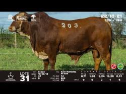 lote 31 - R203 - Braford 3a