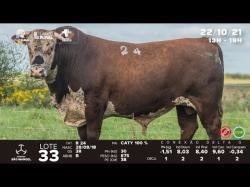 lote 33 - R24 - Braford 3a