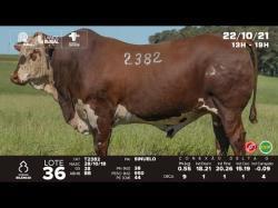 lote 36 - T2382 - Braford 3a