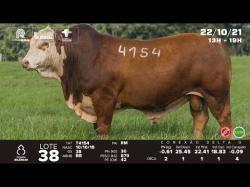 lote 38 - T4154 - Braford 3a