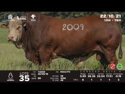 lote 35 -  T2009 - Braford 3a