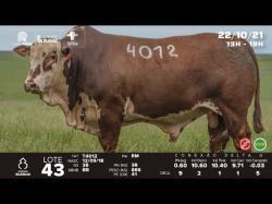 lote 43 - T4012 - Braford 3a