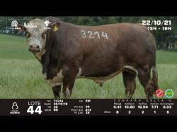 lote 44 - T3214 - Braford 3a