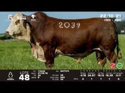 lote 48 - T2039 - Braford 3a