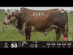lote 50 - T3581 - Braford 3a