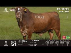 lote 51 - T1003 - Braford 3a