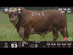 lote 53 - T2143 - Braford 3a