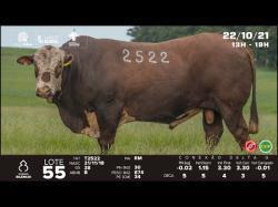 lote 55 - T2522 - Braford 3a