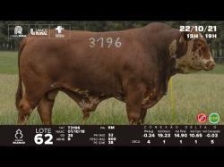 lote 62 - T3196 - Braford 3a