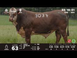 lote 63 - T3037 - Braford 3a