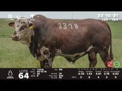lote 64 - T3318 - Braford 3a