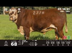 lote 68 - T2338 - Braford 3a