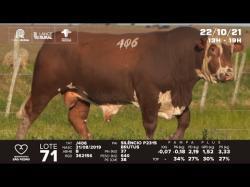 lote 71 - J406 - Braford 2a