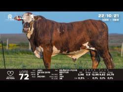 lote 72 - J451 - Braford 2a
