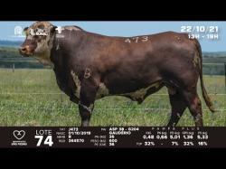 lote 74 - J473 - Braford 2a