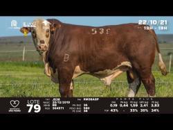 lote 79 - J538 - Braford 2a