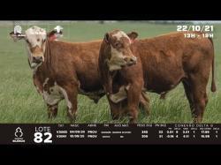 lote 82 - V3065, V3091 - Braford 1,5a