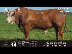 lote 14 - D489 - Braford 3a