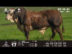 lote 17 - D091 - Braford 3a