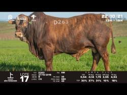 lote 17 - D263 - Braford 3a