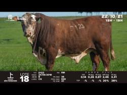 lote 18 - D123 - Braford 3a