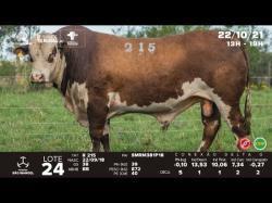 lote 24 - R215 - Braford 3a