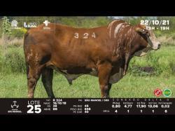 lote 25 - R324 - Braford 3a