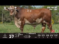 lote 27 - R39 - Braford 3a