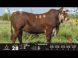lote 28 - R138 - Braford 3a