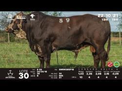 lote 30 - R59 - Braford 3a
