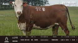 Lote 128