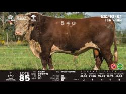 lote 85 - R540 - Hereford 3a