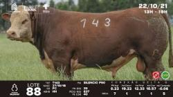 lote 88 - T143 - Hereford - 3a