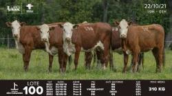 lote 100 - E021, E122, E490, E524, E552 - Femeas 2a