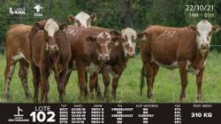 lote 102 - E027, E042, E062, E583, E776 - Femeas 2a