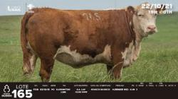 lote 165