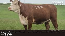 lote 174