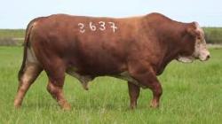 46 - tat 3637