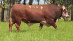 57A - tat 1347